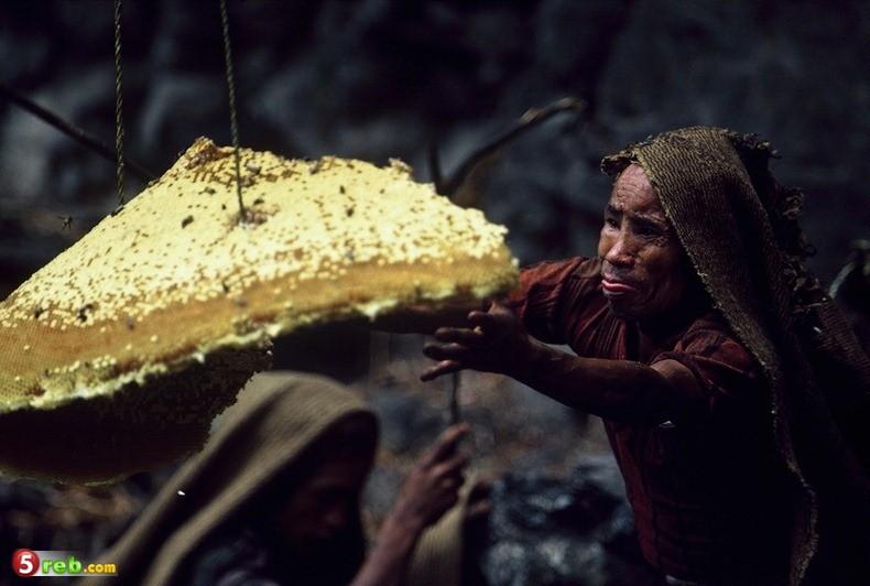 طريق العسل في النيبال - صور