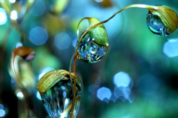 صور رائعة لقطرات الندى كما لم تشاهدها من قبل
