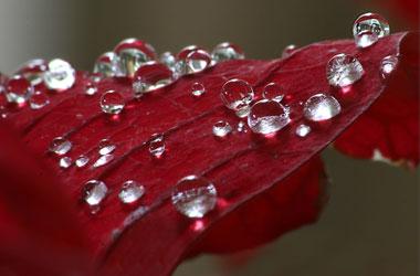 لوحات فنية بقطرات المطر