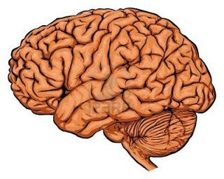 """..حقائق مذهلة عن """"المخ"""" image.php?token=4d1f98b918b2cb7227976d53d5bf837b&size=large"""