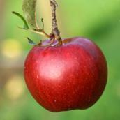 ناسا تؤكد أخيرا نظرية آينشتاين: التفاحة تسقط الأرض image.php?token=6bd0