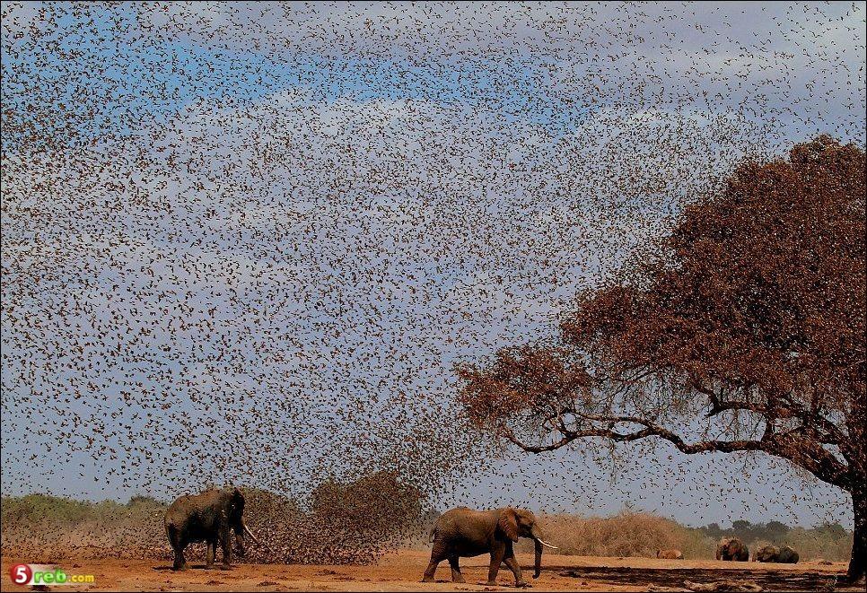 طيور باعداد ضخمه لشرب الماء - صور