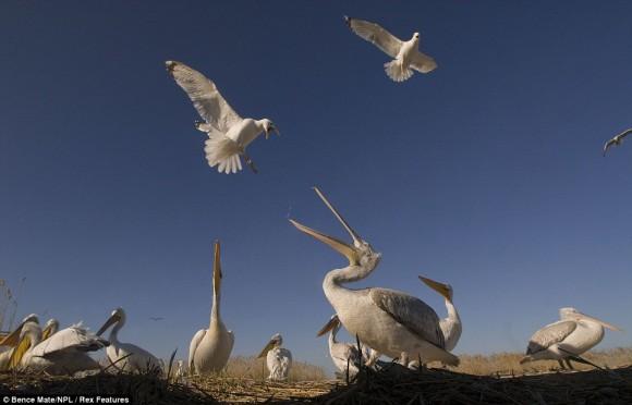 مجموعة صور مدهشة للحياة البرية