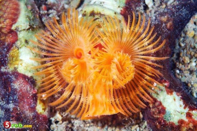مخلوقات البحر الأبيض