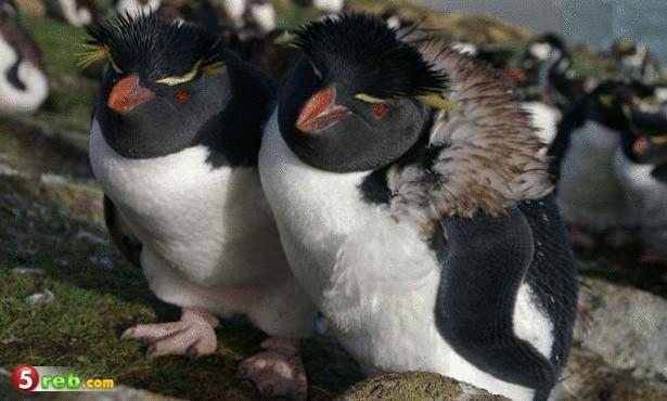 5 طيور لا يمكنها الطيران وبها كل صفات الطيور - صور