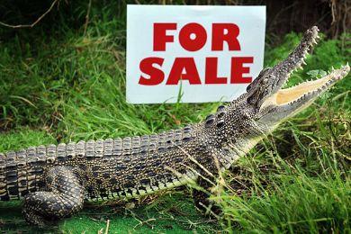 تمساح للبيع يحمي السرقة ويغني